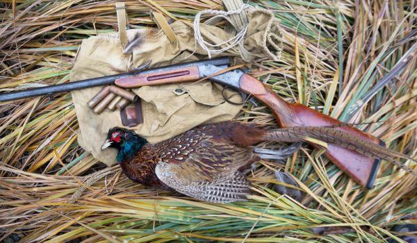 Pheasant-Hunting-Guide