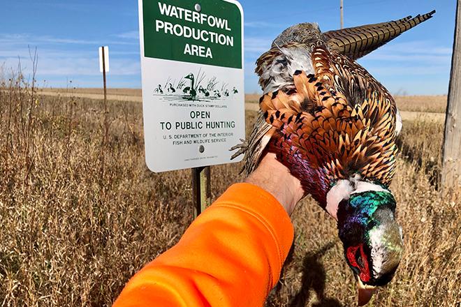 where-to-hunt-pheasants